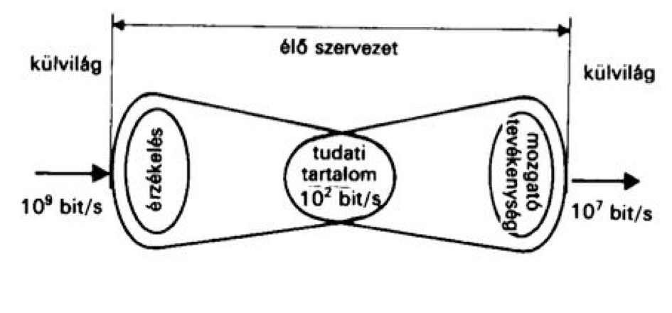 TarjánImreGyörgyiSándorRontóGyörgyi1989InformációcsereJav1