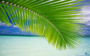 02.beach-palm-leaf
